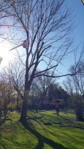 Prepared Arbor Care